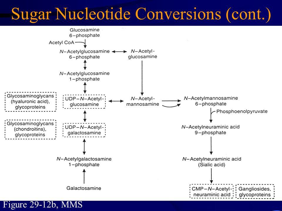 Figure 29-12b, MMS Sugar Nucleotide Conversions (cont.)