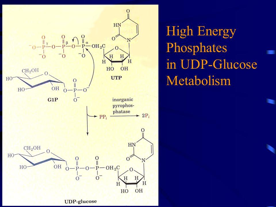 High Energy Phosphates in UDP-Glucose Metabolism