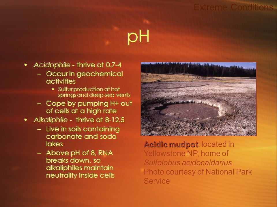 pH Acidophile - thrive at 0.7-4 –Occur in geochemical activities Sulfur production at hot springs and deep-sea vents –Cope by pumping H+ out of cells at a high rate Alkaliphile - thrive at 8-12.5 –Live in soils containing carbonate and soda lakes –Above pH of 8, RNA breaks down, so alkaliphiles maintain neutrality inside cells Acidophile - thrive at 0.7-4 –Occur in geochemical activities Sulfur production at hot springs and deep-sea vents –Cope by pumping H+ out of cells at a high rate Alkaliphile - thrive at 8-12.5 –Live in soils containing carbonate and soda lakes –Above pH of 8, RNA breaks down, so alkaliphiles maintain neutrality inside cells Extreme Conditions Acidic mudpot Acidic mudpot: located in Yellowstone NP, home of Sulfolobus acidocaldarius.