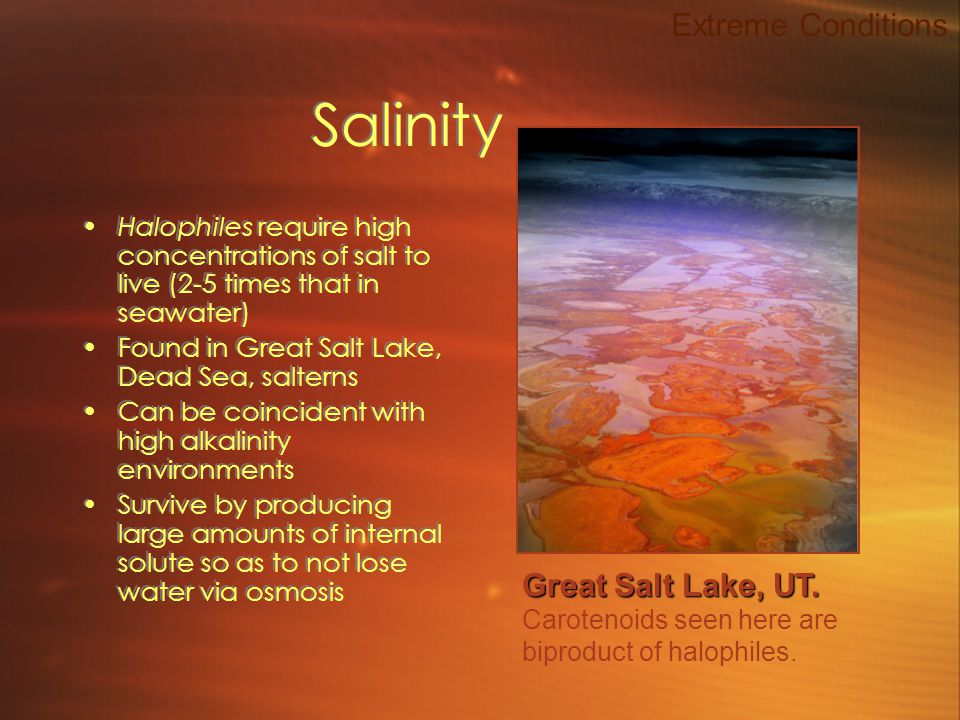 Salinity Halophiles require high concentrations of salt to live (2-5 times that in seawater) Found in Great Salt Lake, Dead Sea, salterns Can be coincident with high alkalinity environments Survive by producing large amounts of internal solute so as to not lose water via osmosis Halophiles require high concentrations of salt to live (2-5 times that in seawater) Found in Great Salt Lake, Dead Sea, salterns Can be coincident with high alkalinity environments Survive by producing large amounts of internal solute so as to not lose water via osmosis Extreme Conditions Great Salt Lake, UT.
