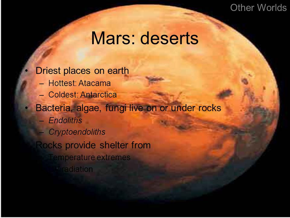 Mars: deserts Driest places on earth –Hottest: Atacama –Coldest: Antarctica Bacteria, algae, fungi live on or under rocks –Endoliths –Cryptoendoliths Rocks provide shelter from –Temperature extremes –UV radiation Other Worlds
