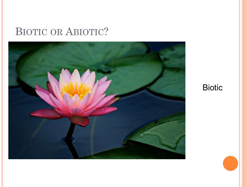 B IOTIC OR A BIOTIC Biotic