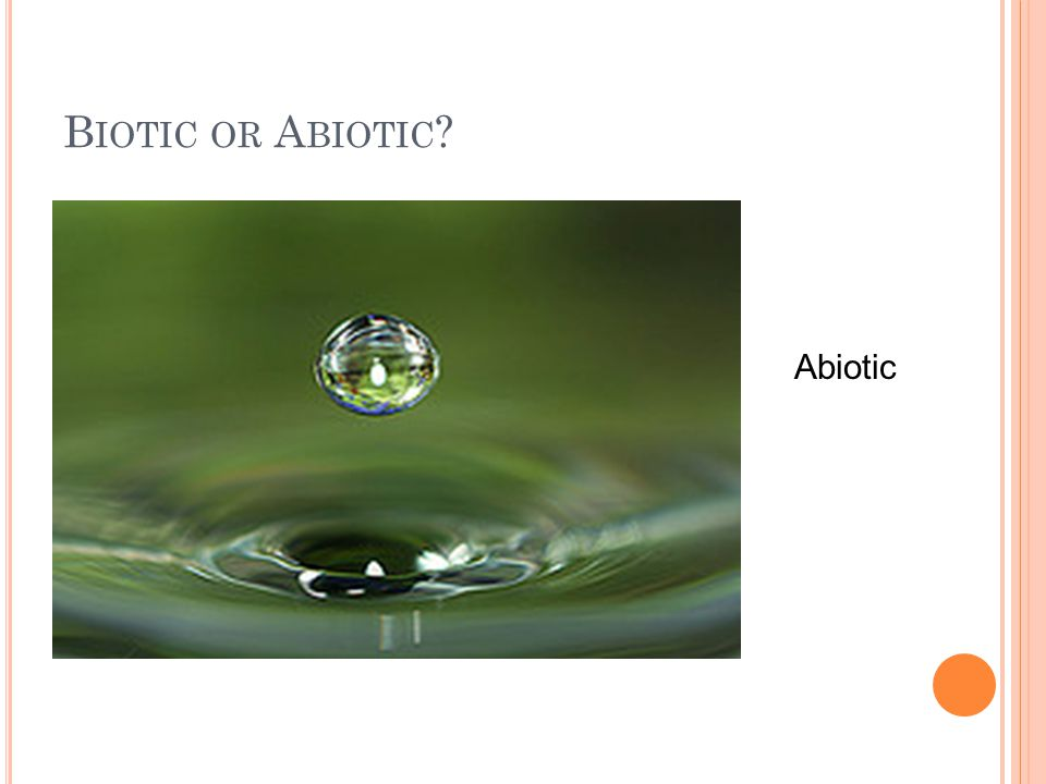 B IOTIC OR A BIOTIC Abiotic