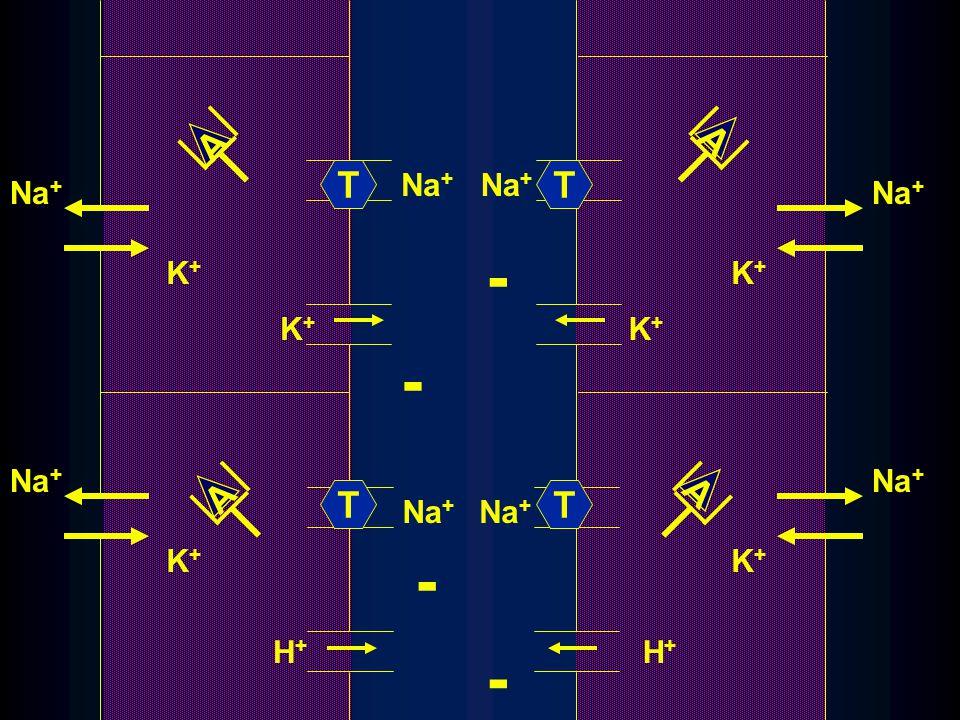 Na + K+K+ K+K+ K+K+ H+H+ K+K+ K+K+ K+K+ H+H+ - - - - A A A A TT TT