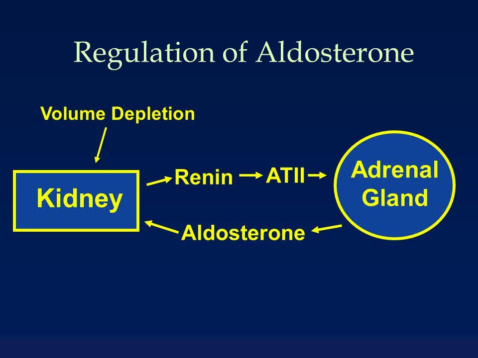 Adrenal Gland Kidney Aldosterone Renin ATII Volume Depletion Regulation of Aldosterone
