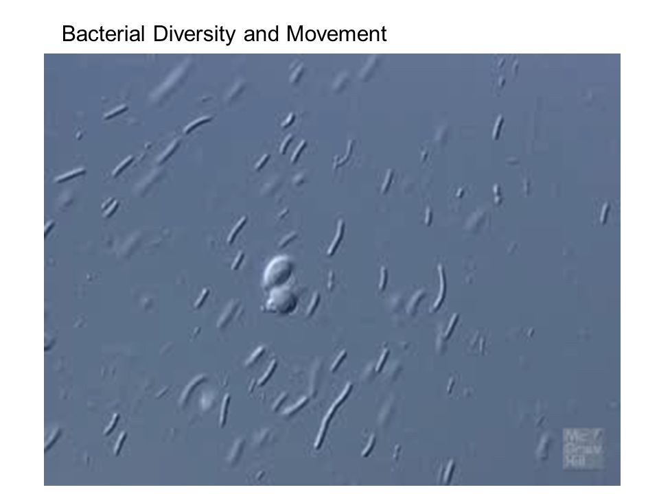Bacterial Diversity and Movement