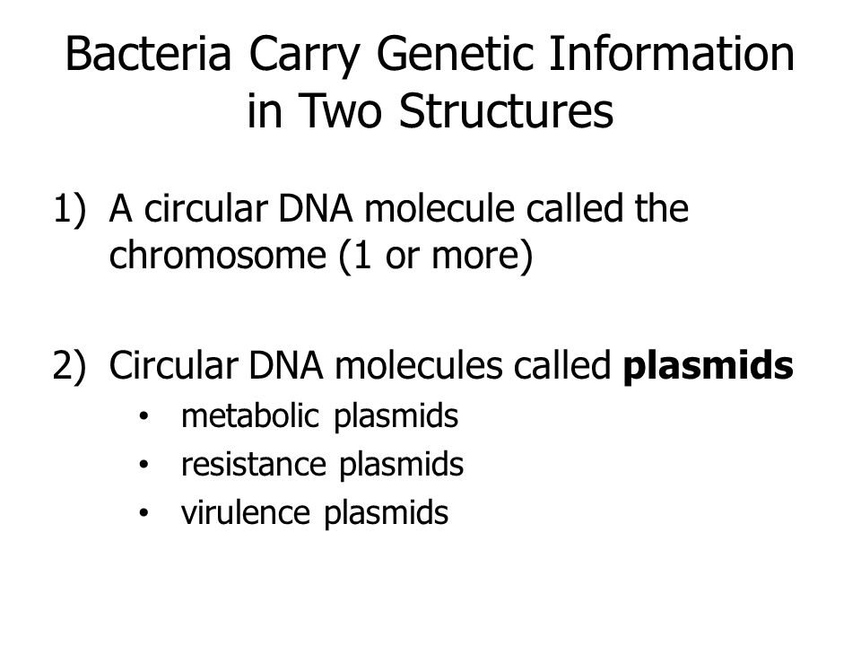 Bacteria Carry Genetic Information in Two Structures 1)A circular DNA molecule called the chromosome (1 or more) 2)Circular DNA molecules called plasm
