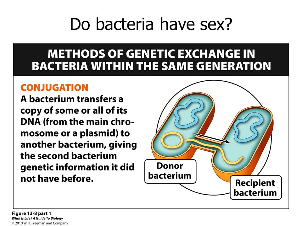 Do bacteria have sex?