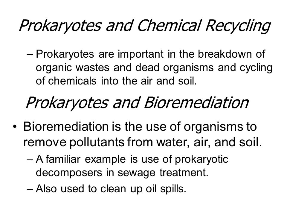Prokaryotes and Chemical Recycling –Prokaryotes are important in the breakdown of organic wastes and dead organisms and cycling of chemicals into the