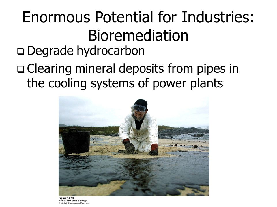 Enormous Potential for Industries: Bioremediation  Degrade hydrocarbon  Clearing mineral deposits from pipes in the cooling systems of power plants