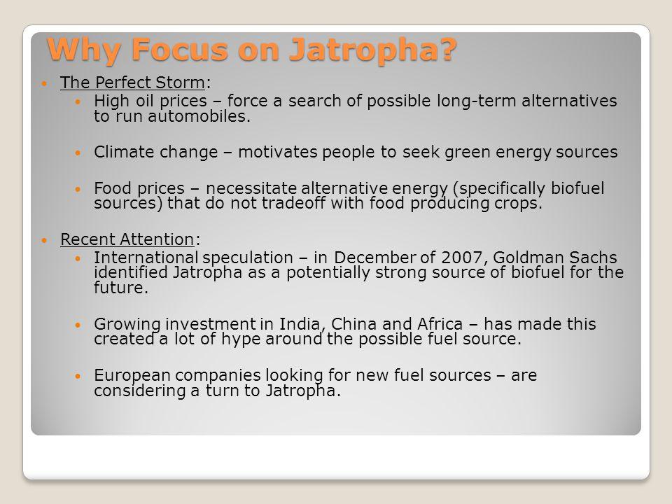Why Focus on Jatropha.