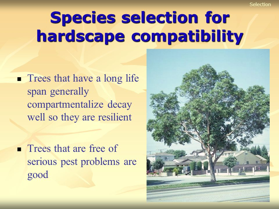 Species selection for hardscape compatibility Trees that have a long life span generally compartmentalize decay well so they are resilient Trees that