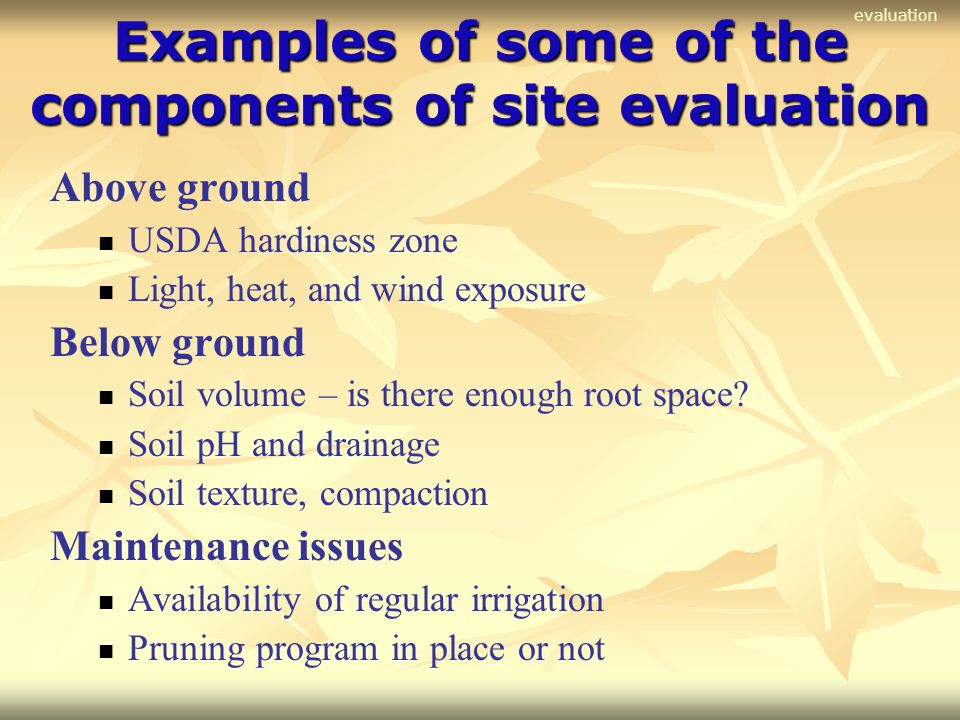 Examples of some of the components of site evaluation Above ground USDA hardiness zone Light, heat, and wind exposure Below ground Soil volume – is th