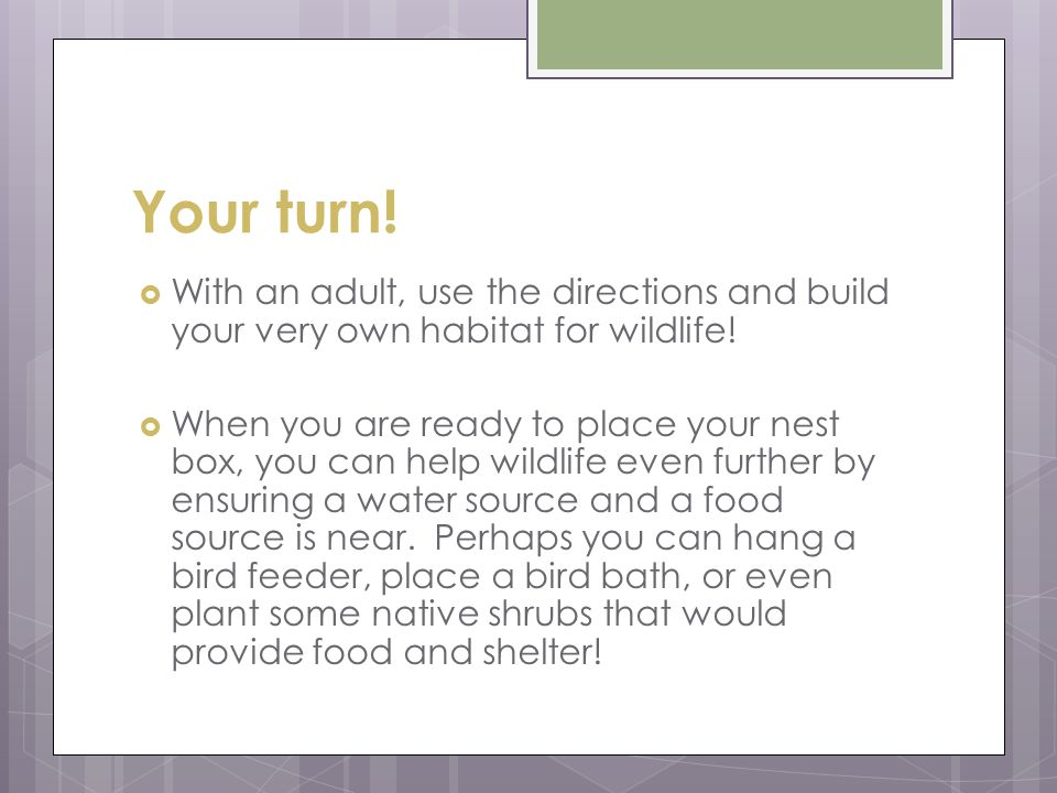 Your turn.  With an adult, use the directions and build your very own habitat for wildlife.