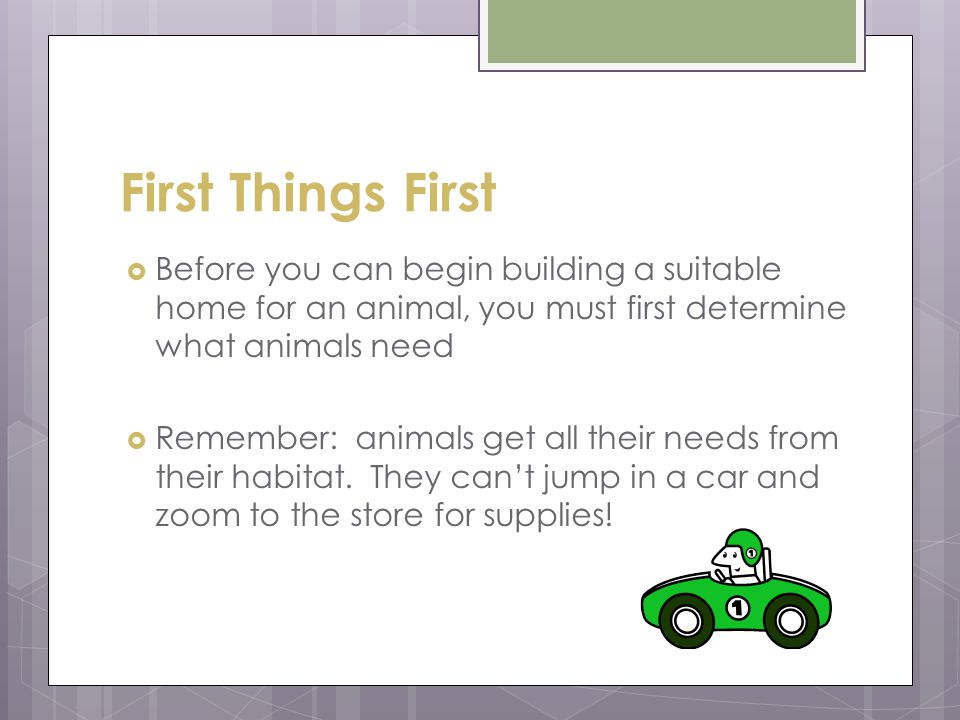 First Things First  What do animals need?  All animals need:  Food  Water  Shelter  Space