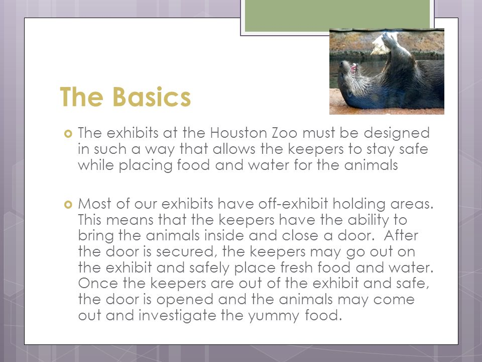 The Basics  The exhibits at the Houston Zoo must be designed in such a way that allows the keepers to stay safe while placing food and water for the animals  Most of our exhibits have off-exhibit holding areas.