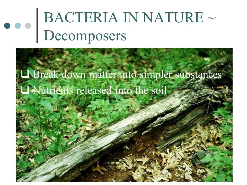 BACTERIA IN NATURE ~ Decomposers  Break down matter into simpler substances  Nutrients released into the soil