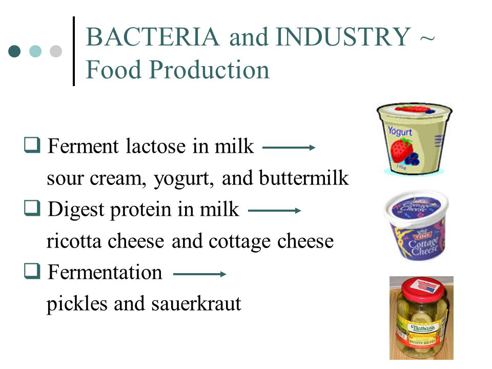 BACTERIA and INDUSTRY ~ Food Production  Ferment lactose in milk sour cream, yogurt, and buttermilk  Digest protein in milk ricotta cheese and cotta