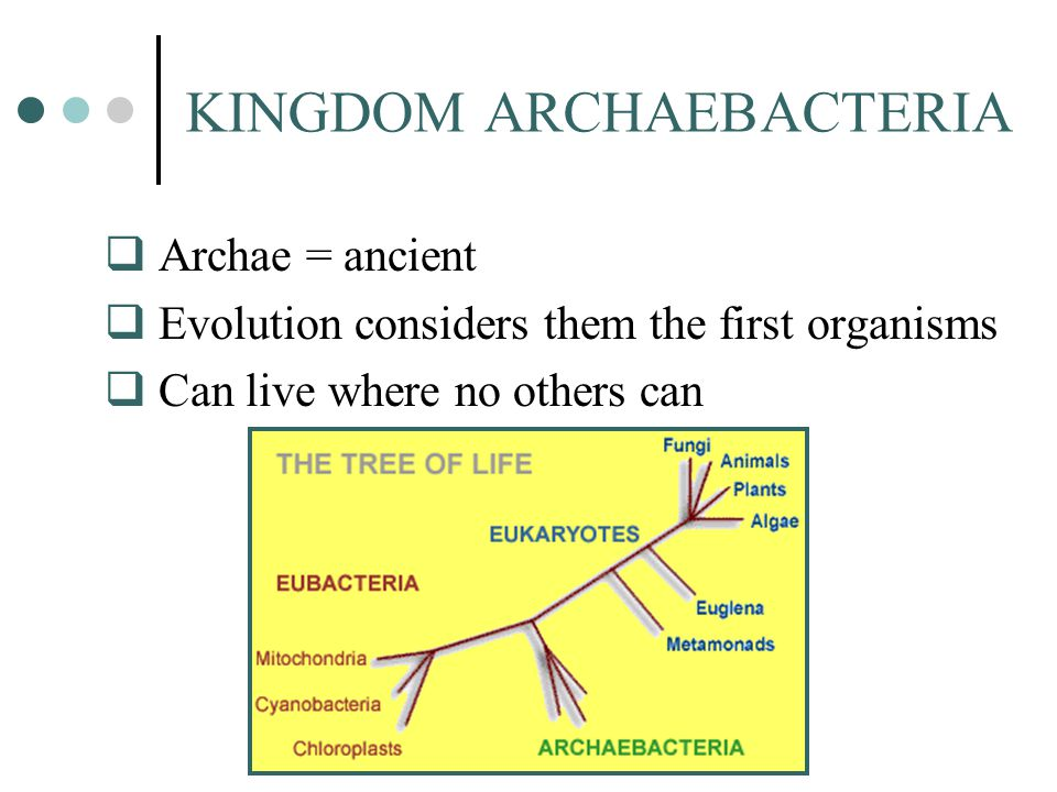 KINGDOM ARCHAEBACTERIA  Archae = ancient  Evolution considers them the first organisms  Can live where no others can