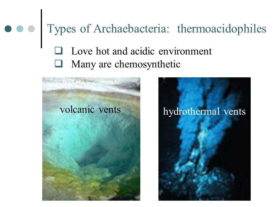 Types of Archaebacteria: thermoacidophiles  Love hot and acidic environment  Many are chemosynthetic volcanic vents hydrothermal vents