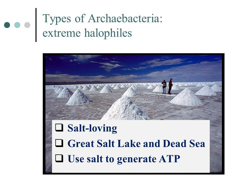 Types of Archaebacteria: extreme halophiles  Salt-loving  Great Salt Lake and Dead Sea  Use salt to generate ATP