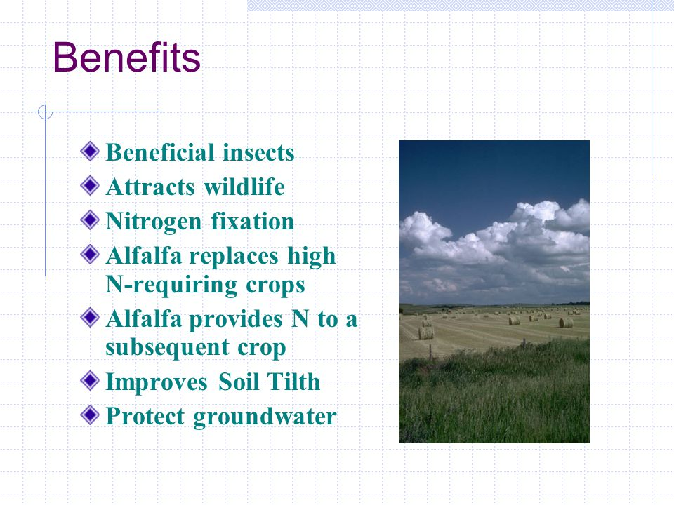 Benefits Beneficial insects Attracts wildlife Nitrogen fixation Alfalfa replaces high N-requiring crops Alfalfa provides N to a subsequent crop Improves Soil Tilth Protect groundwater