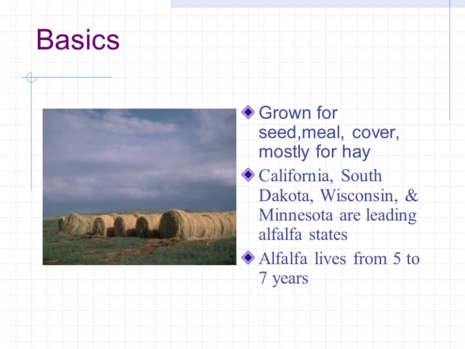 Basics Grown for seed,meal, cover, mostly for hay California, South Dakota, Wisconsin, & Minnesota are leading alfalfa states Alfalfa lives from 5 to 7 years