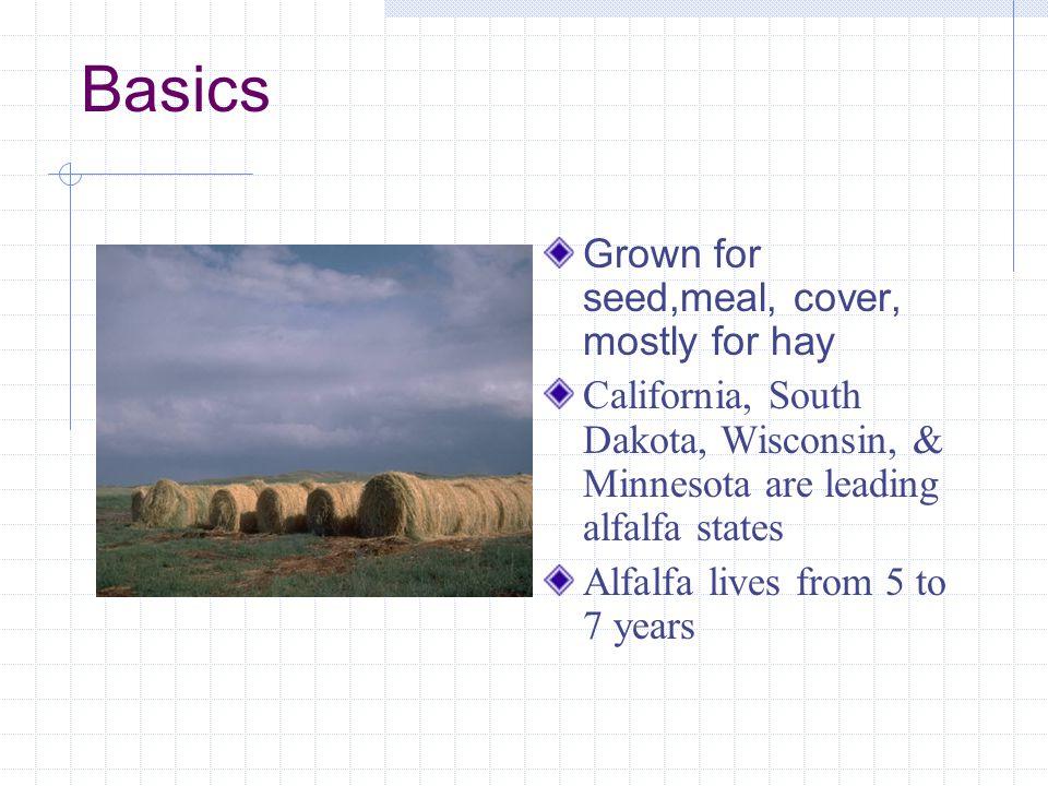 Pests – Egyptian Alfalfa Weevil 1.Alfalfa caterpillar 2.