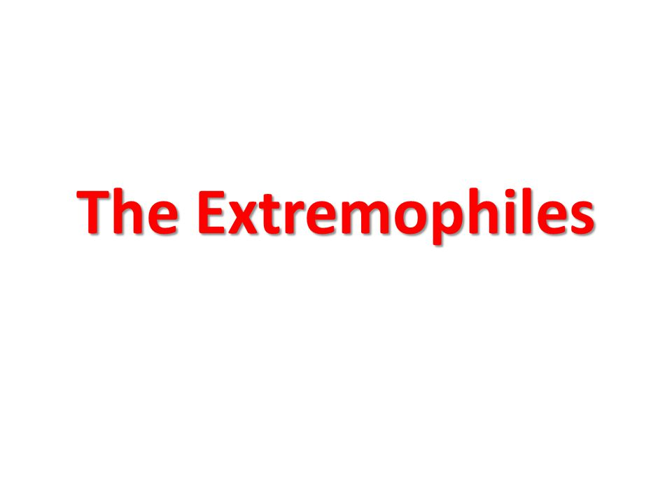 The Extremophiles