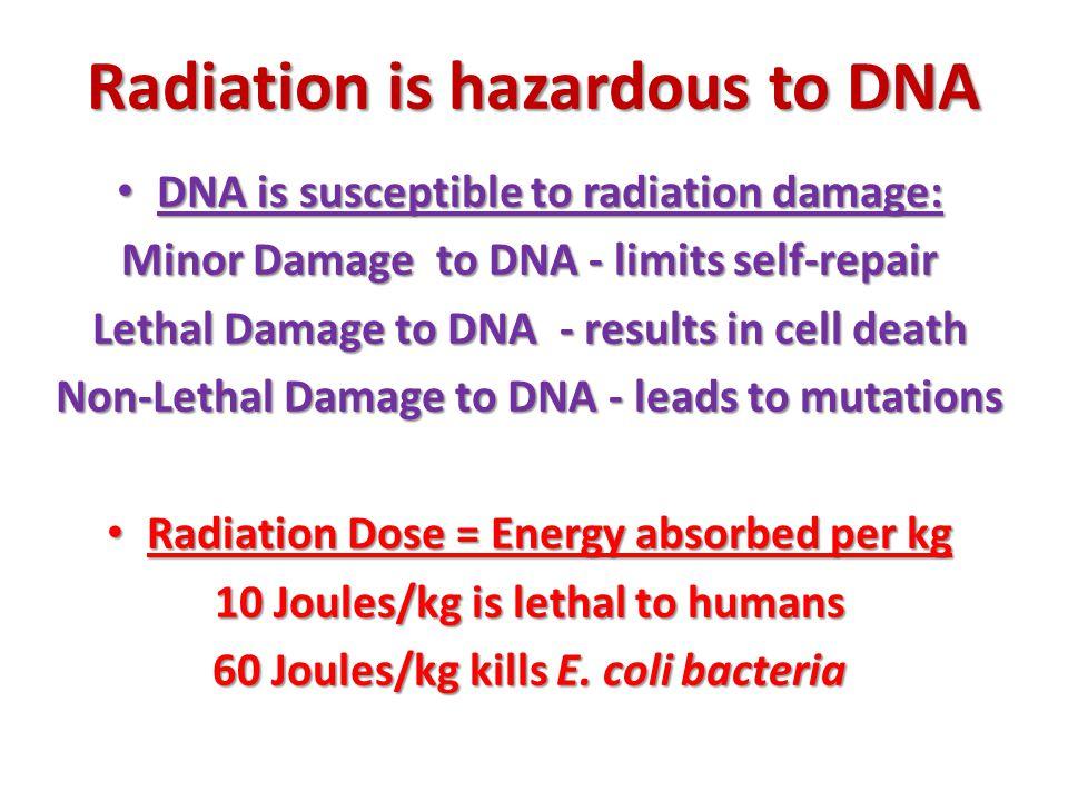 Radiation is hazardous to DNA DNA is susceptible to radiation damage: DNA is susceptible to radiation damage: Minor Damage to DNA - limits self-repair