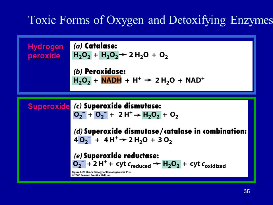 35 Toxic Forms of Oxygen and Detoxifying EnzymesHydrogenperoxide Superoxide