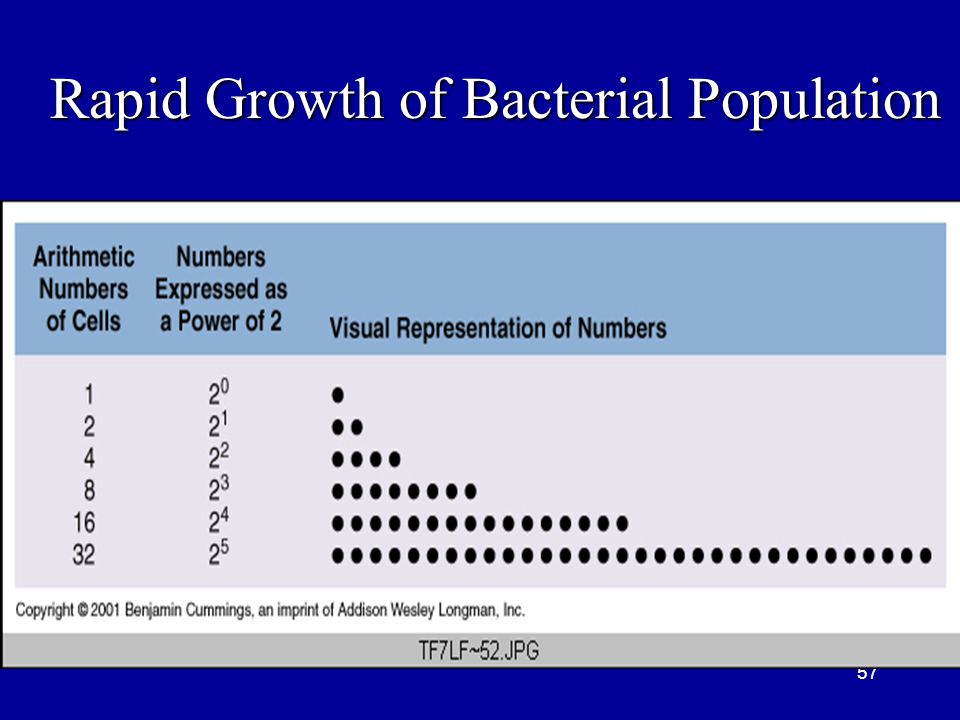 57 Rapid Growth of Bacterial Population