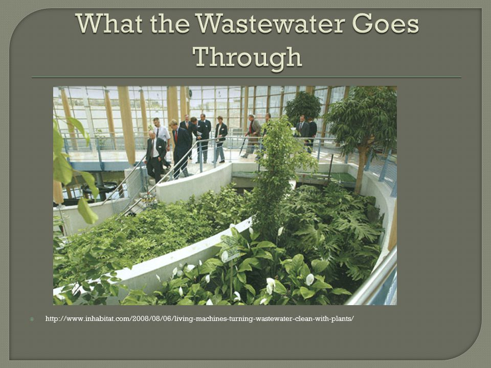  http://www.inhabitat.com/2008/08/06/living-machines-turning-wastewater-clean-with-plants/