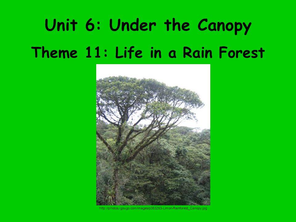 Unit 6: Under the Canopy Theme 11: Life in a Rain Forest http://photos.igougo.com/images/p353263-Limon-Rainforest_Canopy.jpg
