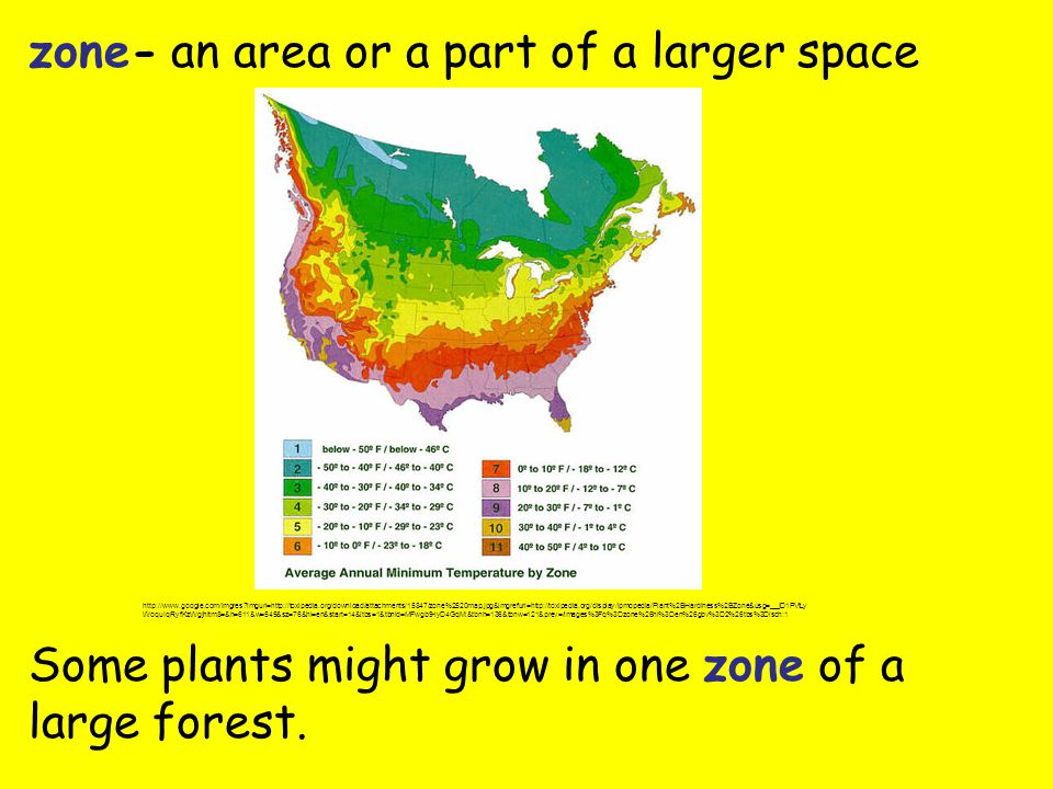 zone- an area or a part of a larger space Some plants might grow in one zone of a large forest.