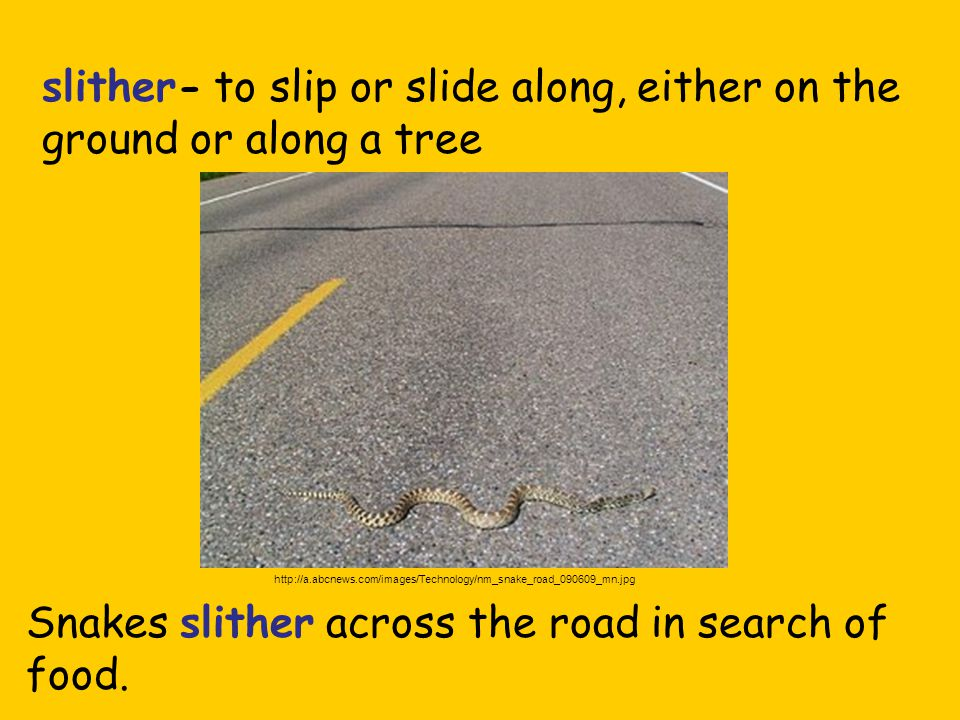 slither- to slip or slide along, either on the ground or along a tree Snakes slither across the road in search of food.