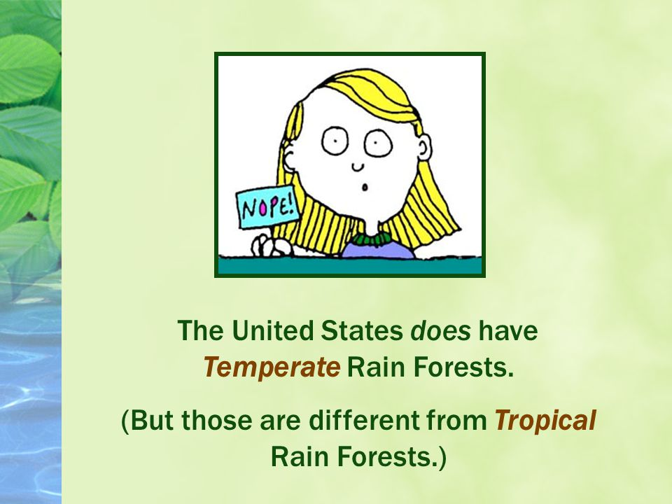 Are there Tropical Rain Forests in the United States