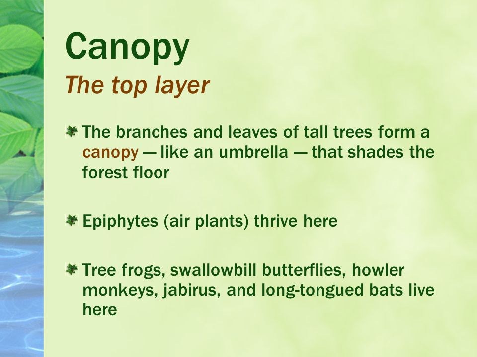 A Tropical Rain Forest is made up of three layers : Canopy Understory Forest floor