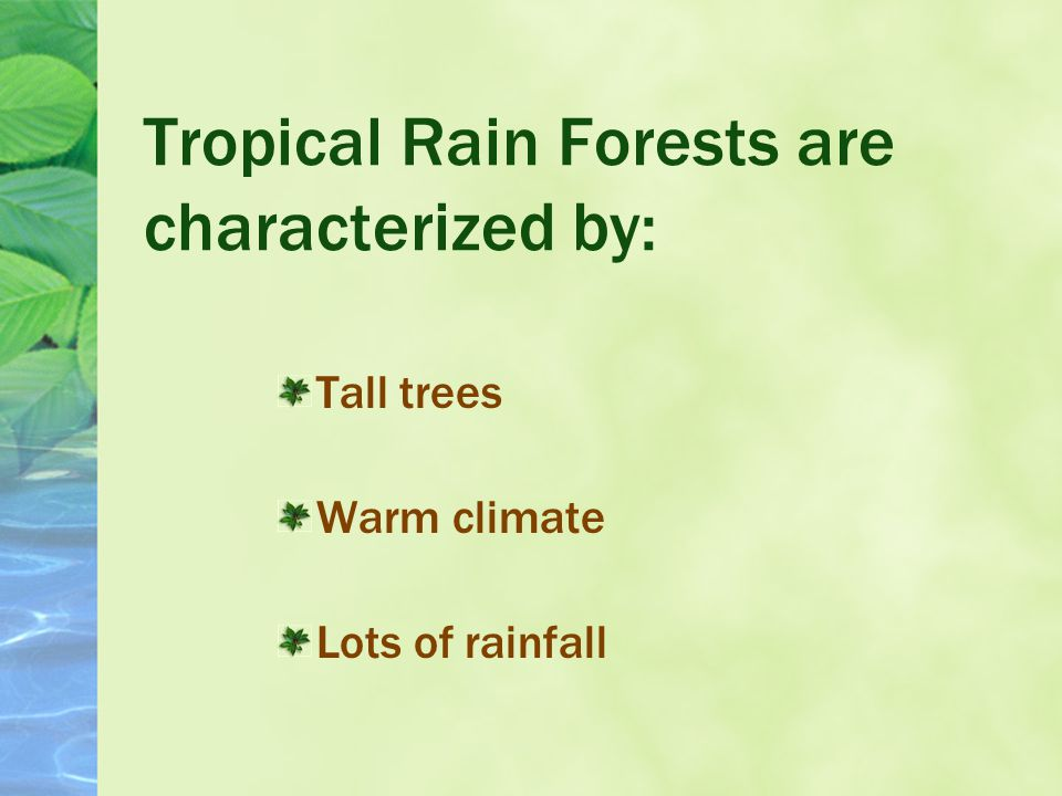 What are Tropical Rain Forests?