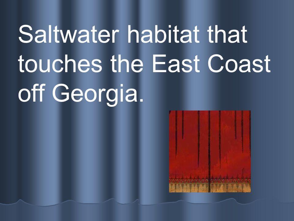 Atlantic Ocean Saltwater habitat that touches the East Coast off Georgia.