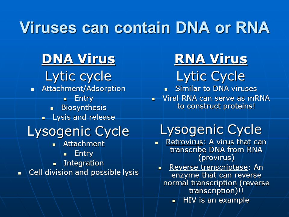 Viruses can contain DNA or RNA DNA Virus Lytic cycle Attachment/Adsorption Attachment/Adsorption Entry Entry Biosynthesis Biosynthesis Lysis and release Lysis and release Lysogenic Cycle Attachment Attachment Entry Entry Integration Integration Cell division and possible lysis Cell division and possible lysis RNA Virus Lytic Cycle Similar to DNA viruses Similar to DNA viruses Viral RNA can serve as mRNA to construct proteins.