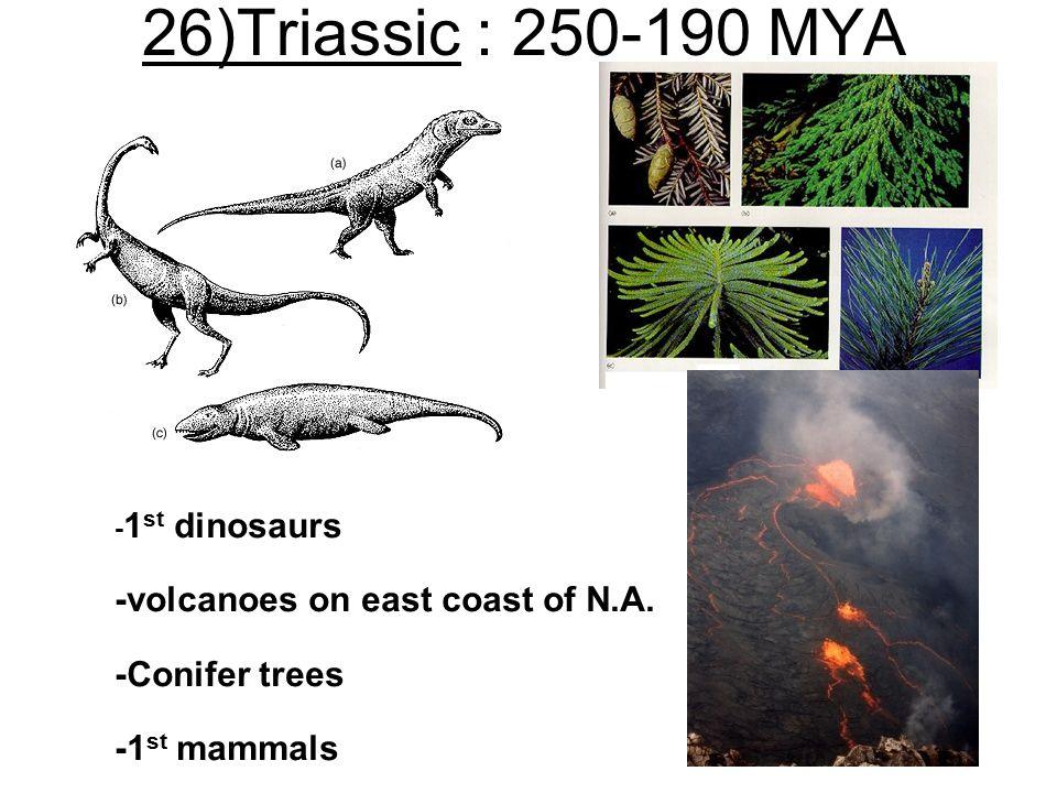 26)Triassic : 250-190 MYA - 1 st dinosaurs -volcanoes on east coast of N.A. -Conifer trees -1 st mammals