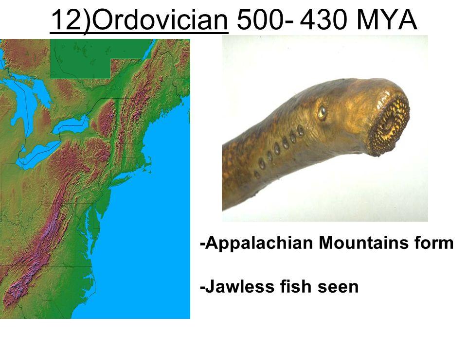 12)Ordovician 500- 430 MYA -Appalachian Mountains form -Jawless fish seen