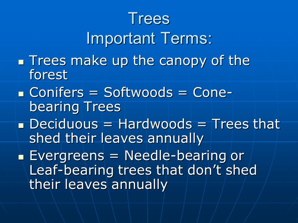 Trees Important Terms: Trees make up the canopy of the forest Trees make up the canopy of the forest Conifers = Softwoods = Cone- bearing Trees Conifers = Softwoods = Cone- bearing Trees Deciduous = Hardwoods = Trees that shed their leaves annually Deciduous = Hardwoods = Trees that shed their leaves annually Evergreens = Needle-bearing or Leaf-bearing trees that don't shed their leaves annually Evergreens = Needle-bearing or Leaf-bearing trees that don't shed their leaves annually
