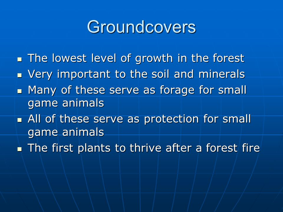 Groundcovers The lowest level of growth in the forest The lowest level of growth in the forest Very important to the soil and minerals Very important to the soil and minerals Many of these serve as forage for small game animals Many of these serve as forage for small game animals All of these serve as protection for small game animals All of these serve as protection for small game animals The first plants to thrive after a forest fire The first plants to thrive after a forest fire