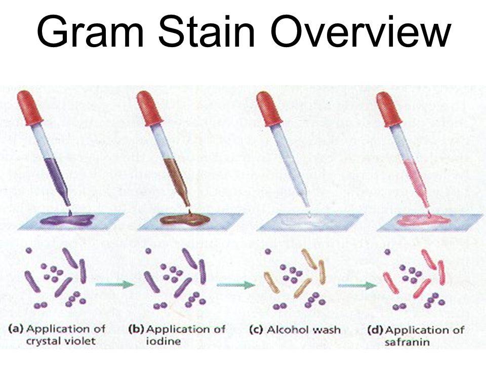 Gram + Gram -