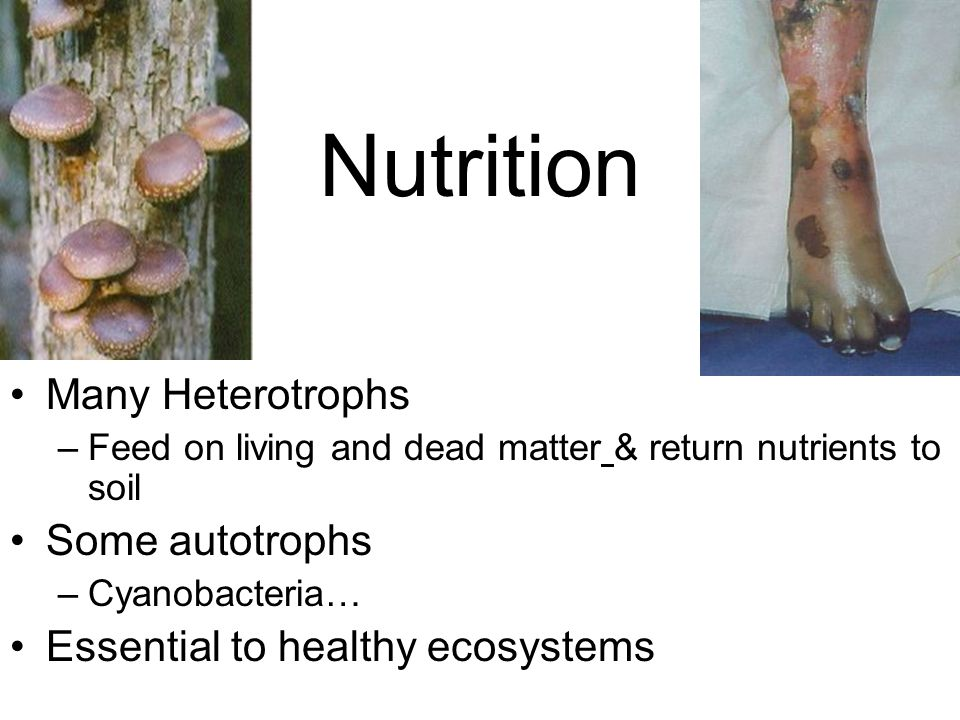 Nutrition Many Heterotrophs –Feed on living and dead matter & return nutrients to soil Some autotrophs –Cyanobacteria… Essential to healthy ecosystems