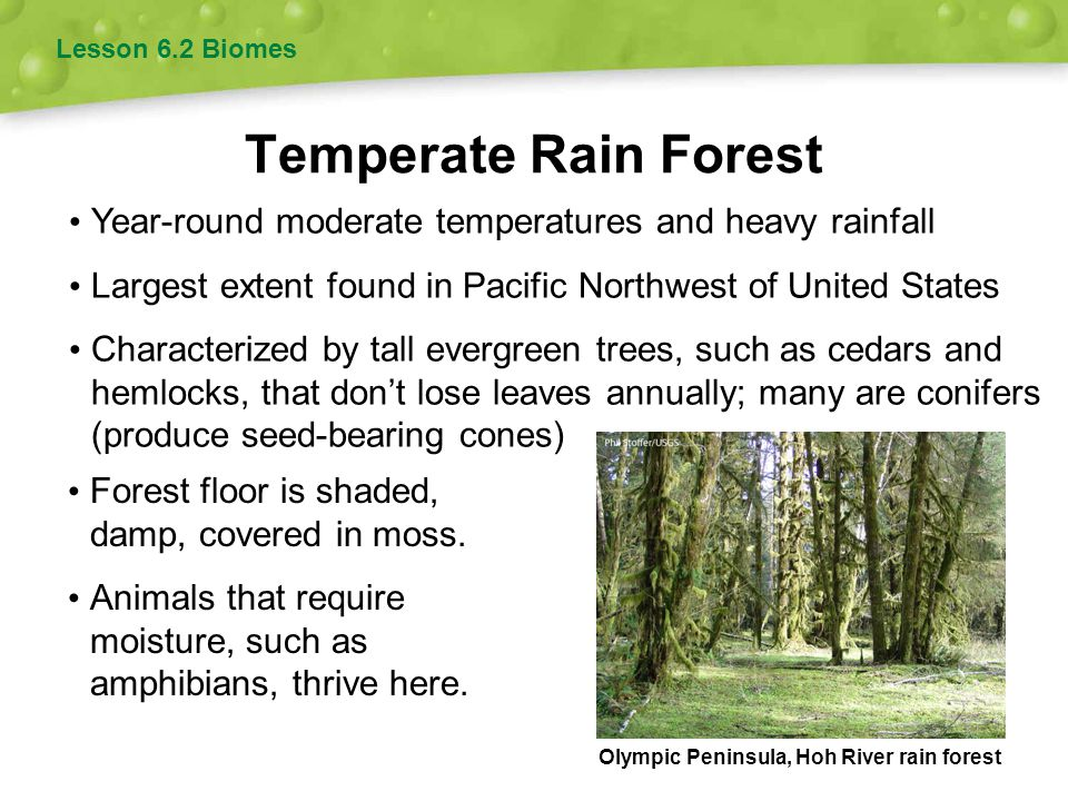 Temperate Rain Forest Lesson 6.2 Biomes Year-round moderate temperatures and heavy rainfall Largest extent found in Pacific Northwest of United States