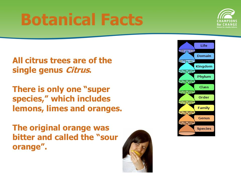 All citrus trees are of the single genus Citrus.