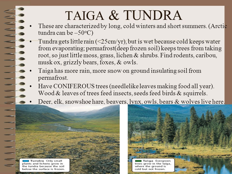TAIGA & TUNDRA These are characterized by long, cold winters and short summers.